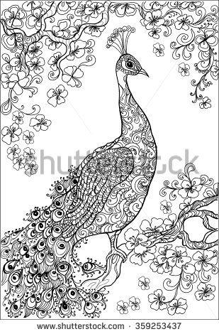 Peacock drawing recherche google · peacock coloring pagespeacock