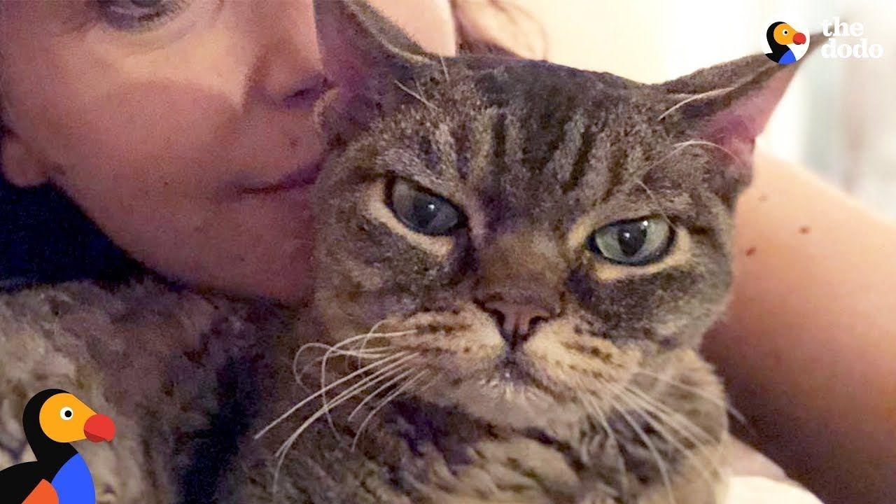 Aggressive Cat Shocks Mom By Becoming A Snugglebug Barbara The Dodo Youtube Cute Baby Animals Benadryl For Cats Animals