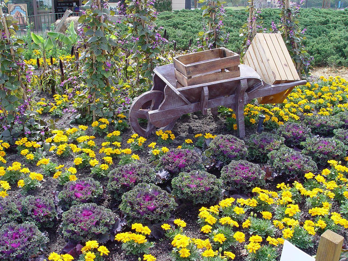 How To Grow Your Organic Vegies In The Warm Winter Desert 400 x 300