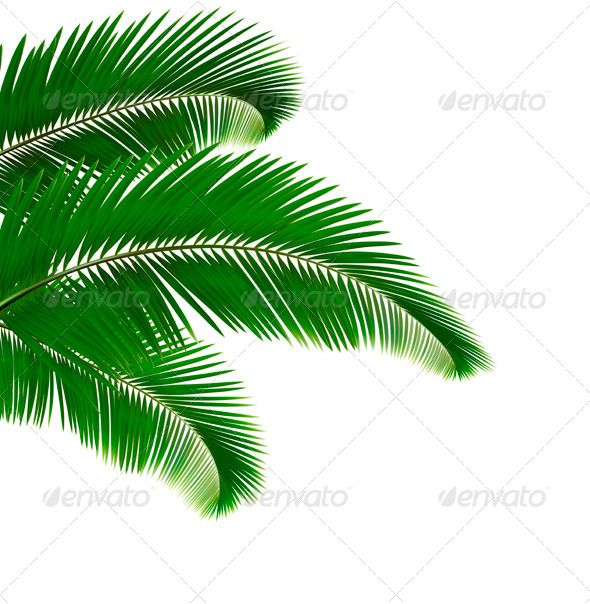 Palm Leaves Gradient mesh, Palm and Leaves - editable leaf template