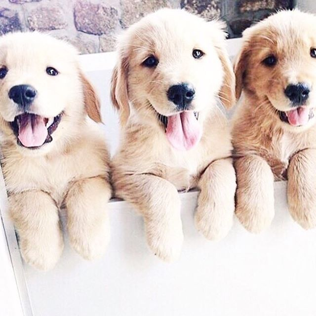 Can T Wait To Start Looking For A New Dog Cute Animals Cute