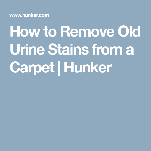 How To Remove Old Urine Stains From A Carpet Urine