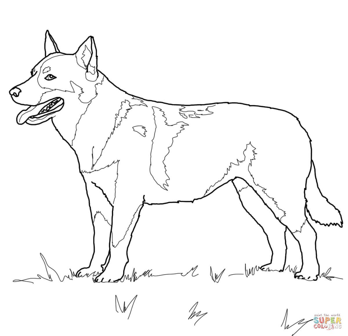Australian Cattle Dog | Super Coloring | dog patterns | Pinterest ...