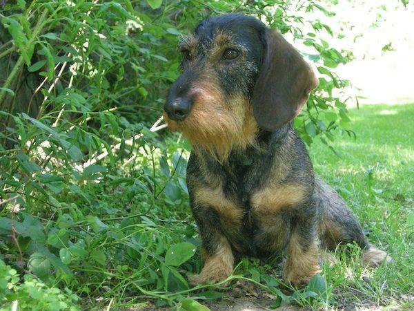 Lesetipps Sicherer Transport Erziehungsfragen Und Tierische Korrektheit In Berlin Hunde Dackel Kleine Hunde