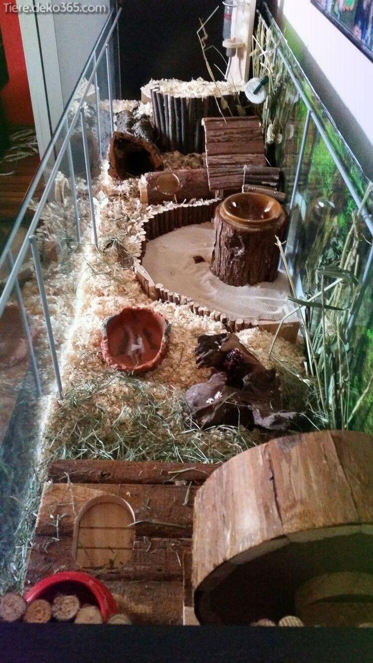 Dies Beste Hamsterhaus Dies Sie Jetzt Erstellen Konnen