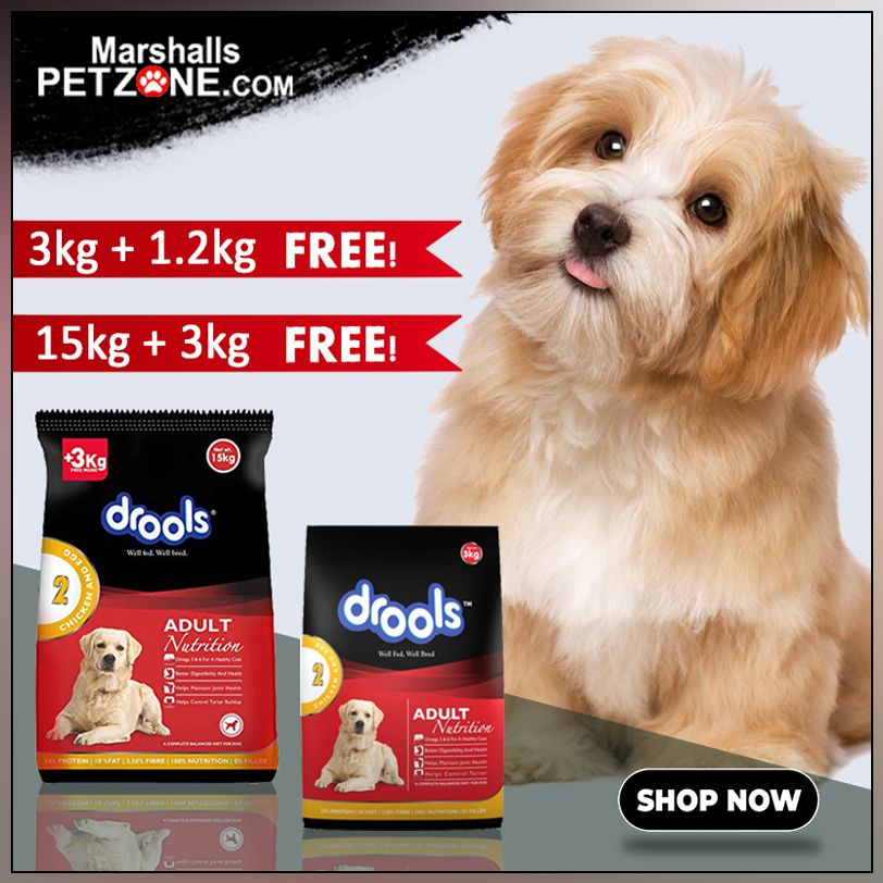 Dont miss out get 3 kg food free on drools buy 15 kg