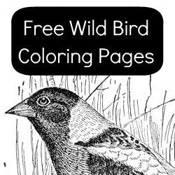 16 Beautifully Detailed Realistic Images Of Common North American Wild Birds To Print And Color These Bird Coloring Pages Show The In