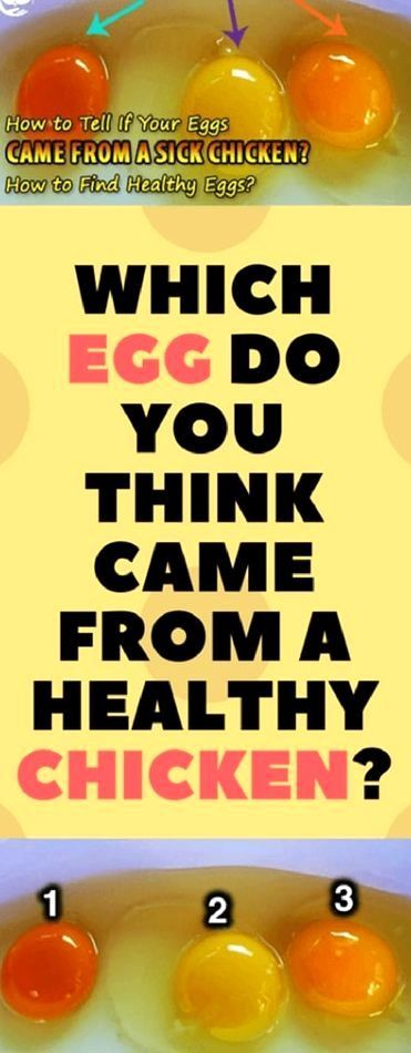 Which Egg Do You Think Came From An Actually Healthy Chicken? Stunning Egg Do You Think Came From An Actually Healthy Chicken?  Stunning