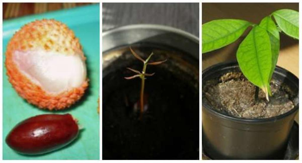 16 Fruits Et Legumes A Faire Pousser A L Infini A Partir De Leurs