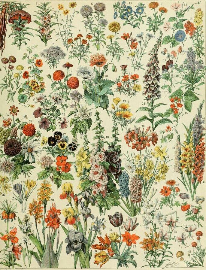 Старинные ретро картинки цветов полевых