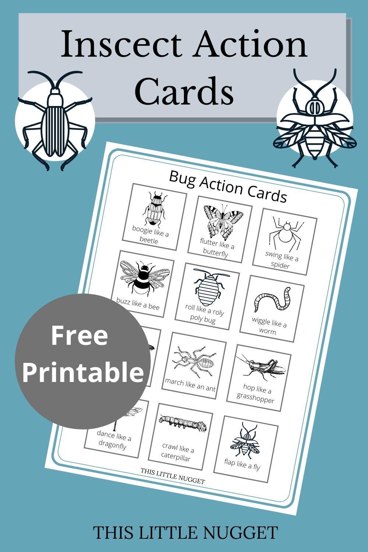 Insect Action Cards Action Cards Insect Activities Preschool Activities