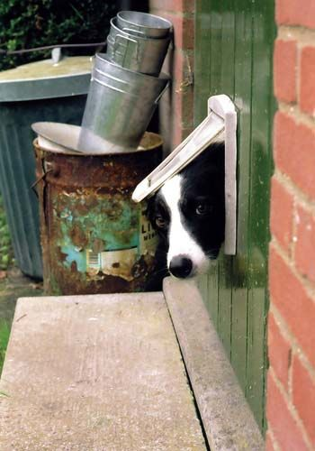 How To Install A Dog Door At Home Doors And Dog