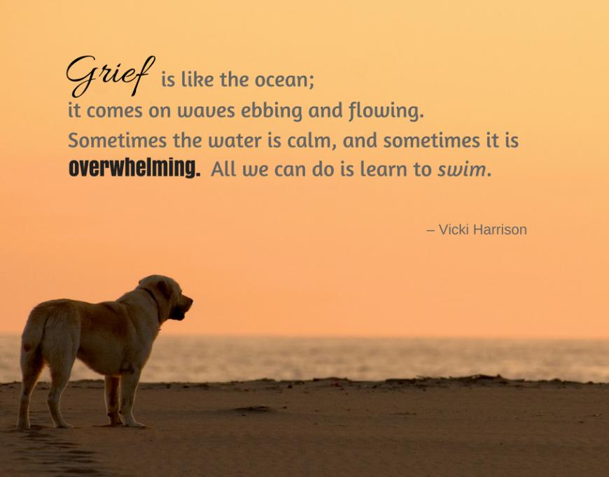 Pet Loss Quotes   Dog loss quotes, Pet loss quotes, Losing a ...
