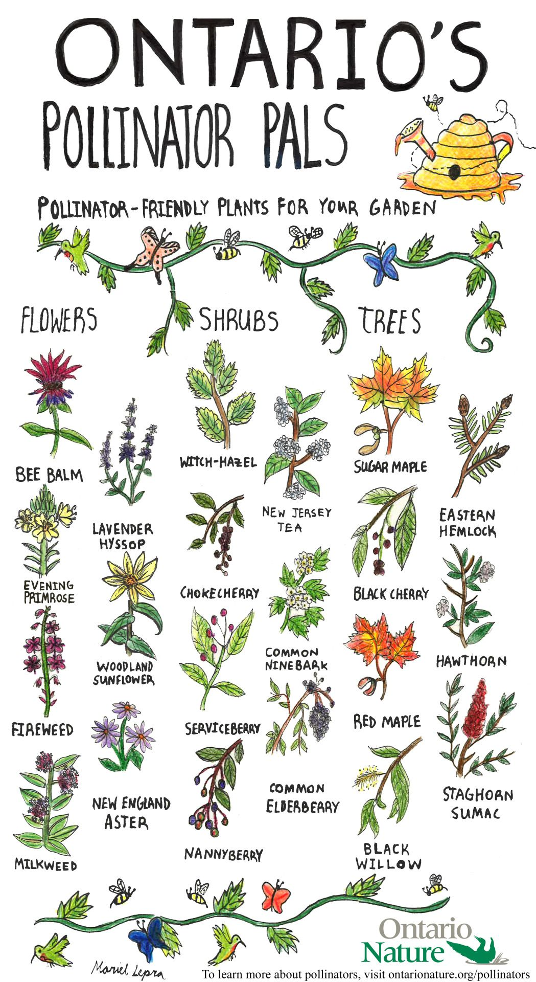 Check Out This Poster Of Native Plants That Will Beautify Your