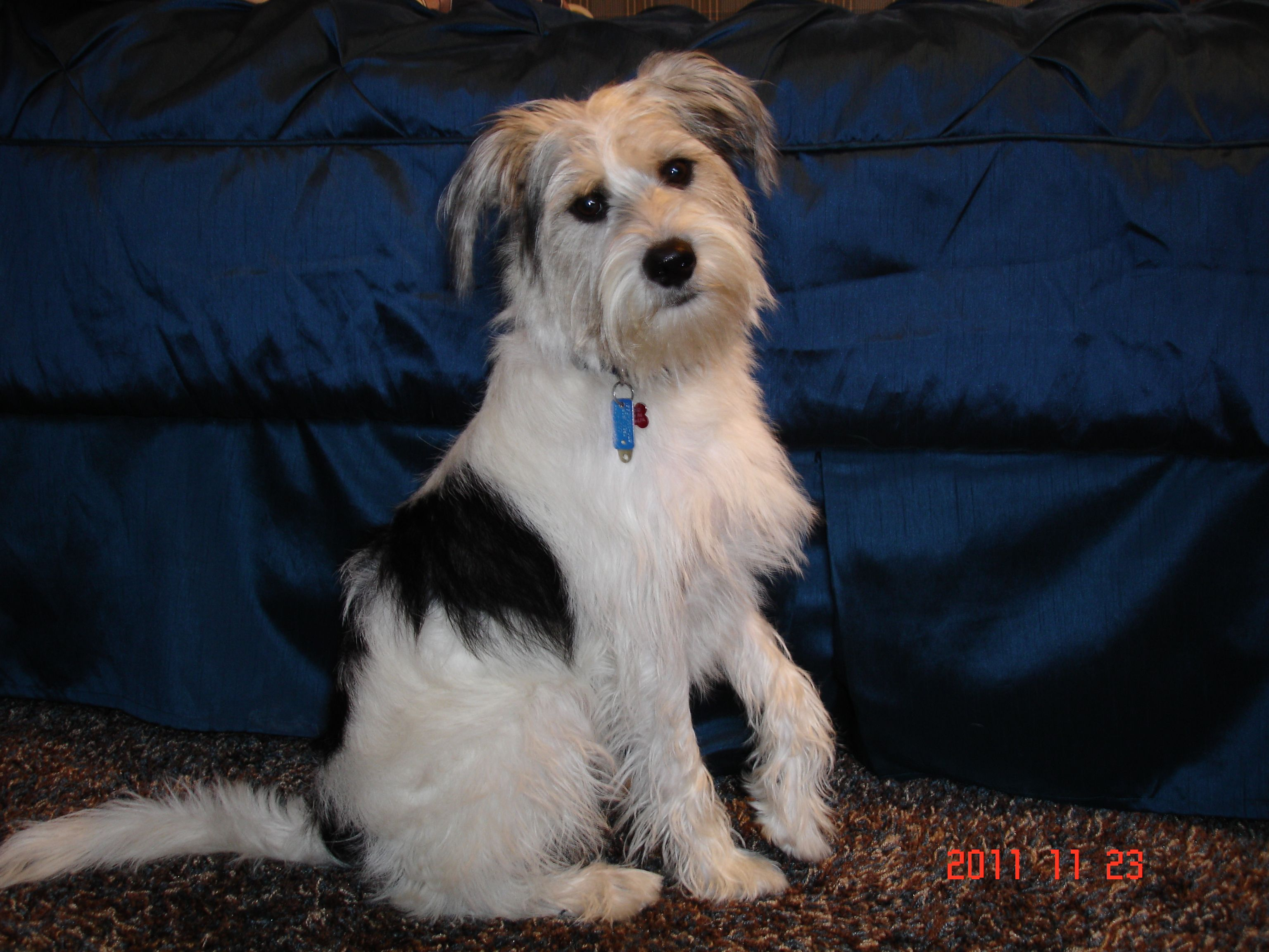 Meet bailey my therapy dog therapy dogs dogs animals