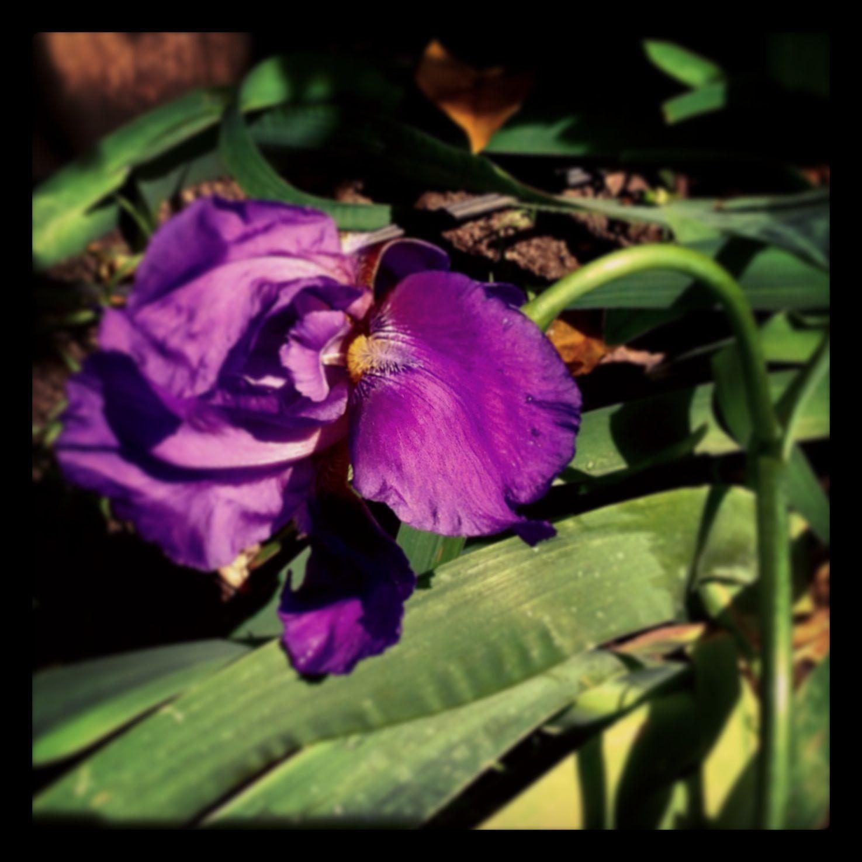 The Purple Color A Cor Purpura Garden Color Plants