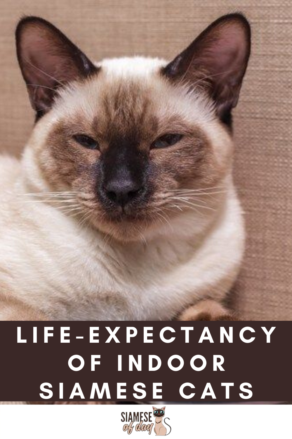 How Long Do Siamese Cats Live How To Increase Their Lifespan In 2020 Cat Lifespan Siamese Cats Siamese Kittens