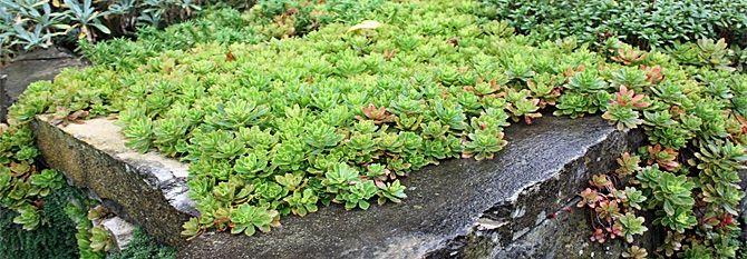 winterharte pflanzen fur steingarten – godsriddle, Garten und erstellen