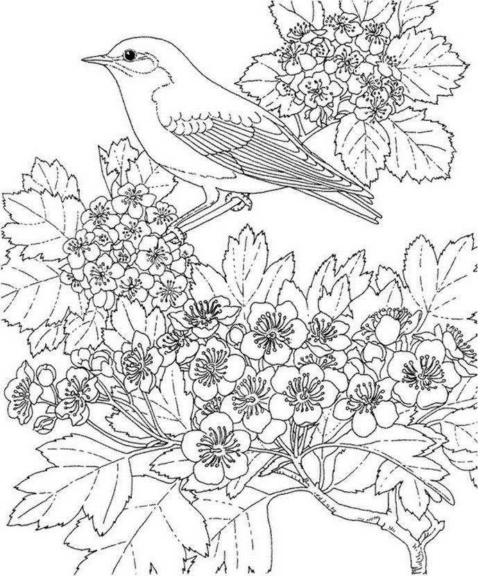 Coloriage adulte oiseau sur une branche en fleurs coloriages et peintures pinterest - Coloriage adulte en ligne ...
