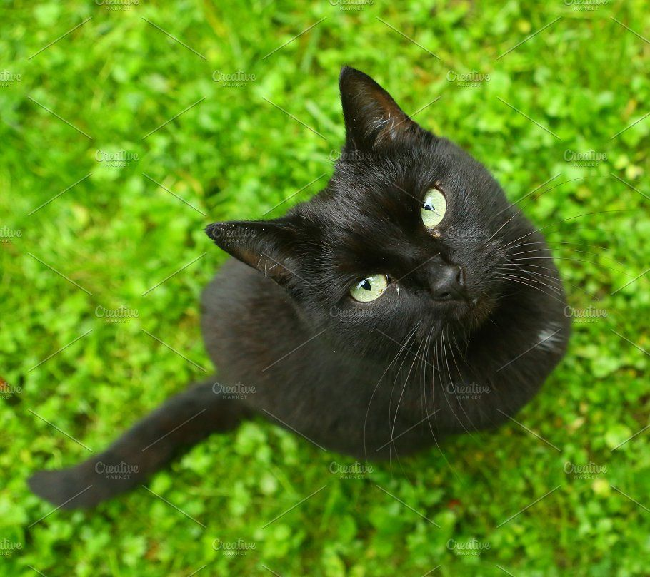 Black cat on green grass from above look up (с