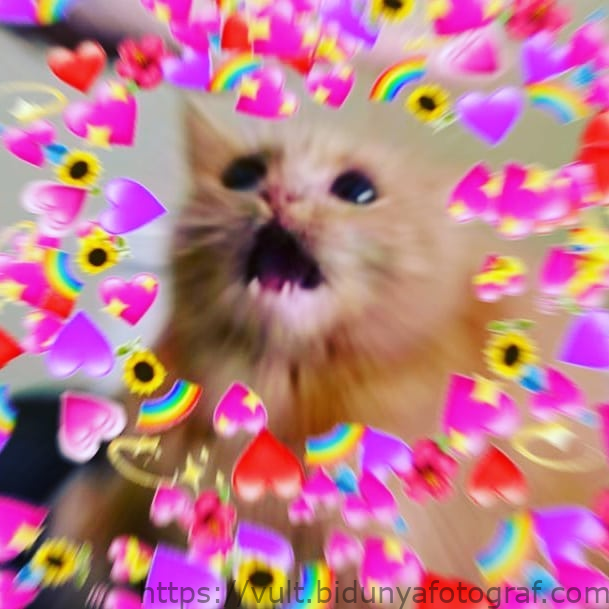 wholesome cat memes hearts Google Sear in 2020 (With