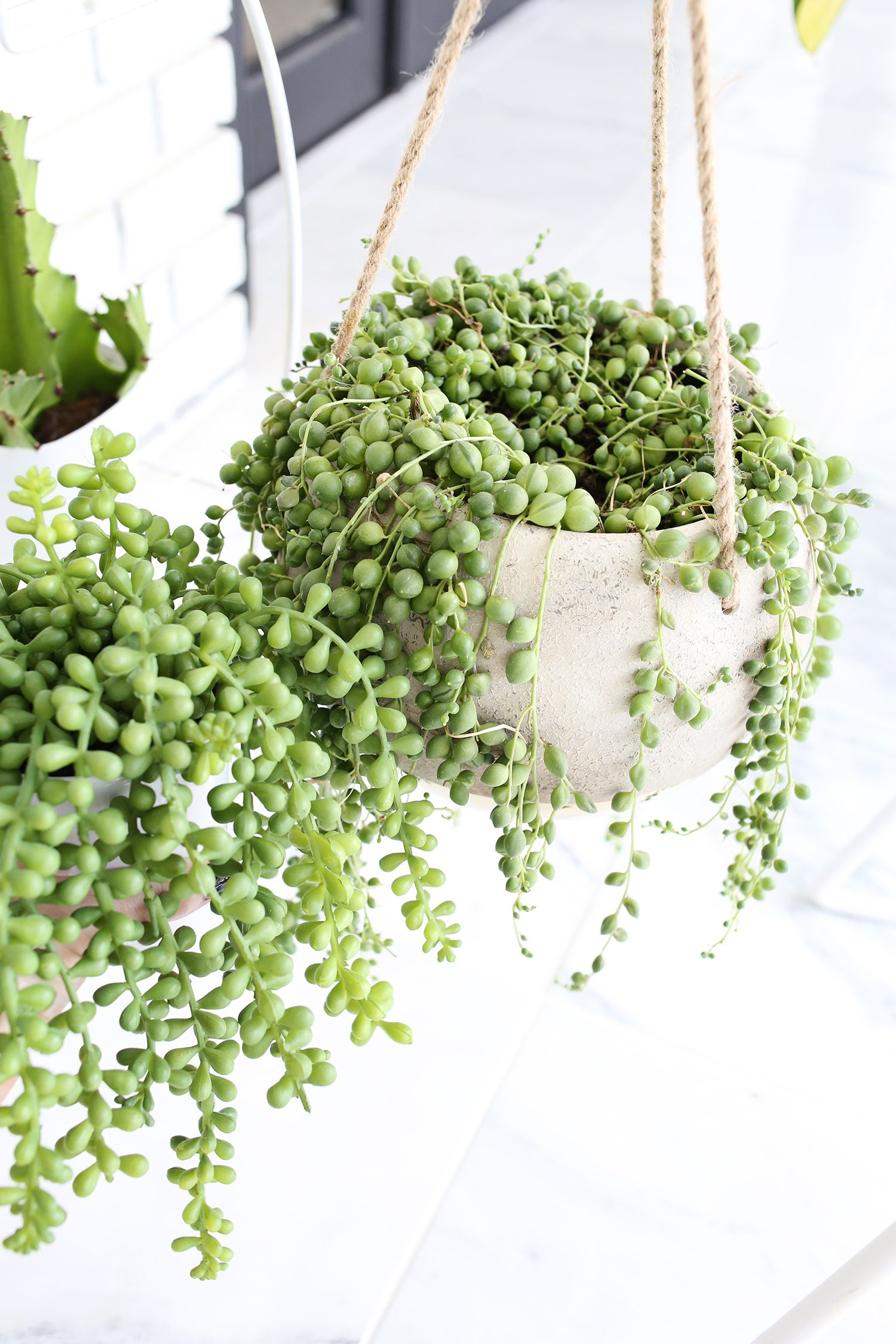 Silks pothos desk top plant in pot amp reviews wayfair -  How To Find Convincing Fake Plants