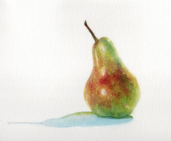 Pear by Jane Duke - watercolour