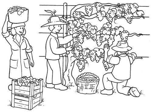 Dibujos Para Colorear Ciclo Del Vino Actividades Dibujos Para Colorear Dibujos Para Colorear Primavera