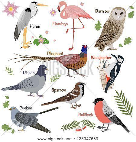 pheasant vector - Google-haku