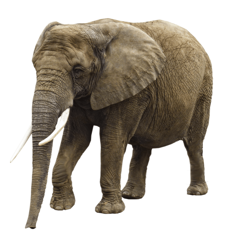 Elephant Png Image Transparent Background Elephant Cute Elephant Cartoon Borneo Elephant Gray elephant illustration, african bush elephant, elephant transparent background png clipart. elephant png image transparent