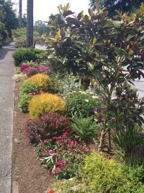 Parking Strip Seattle Garden Design Plants Garden