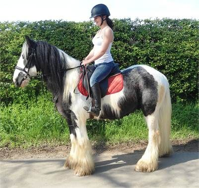 cyril - 14.2hh safe and reliable kick along first cob, http://www.equineclassifieds.co.uk/Horse/142hh-safe-and-reliable-kick-along-first-cob-listing-797.aspx#.U5bHf3YTCZZ