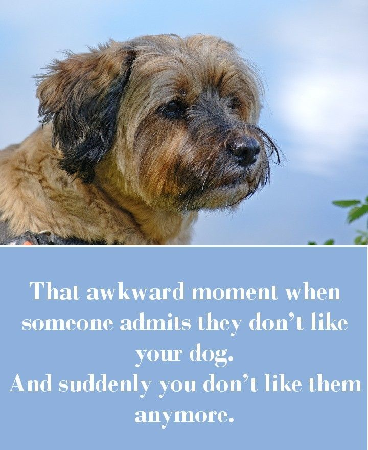 Dog Sayings Which Will Touch Your Heart Awkward Moments Dog - 42 awkward moments ever
