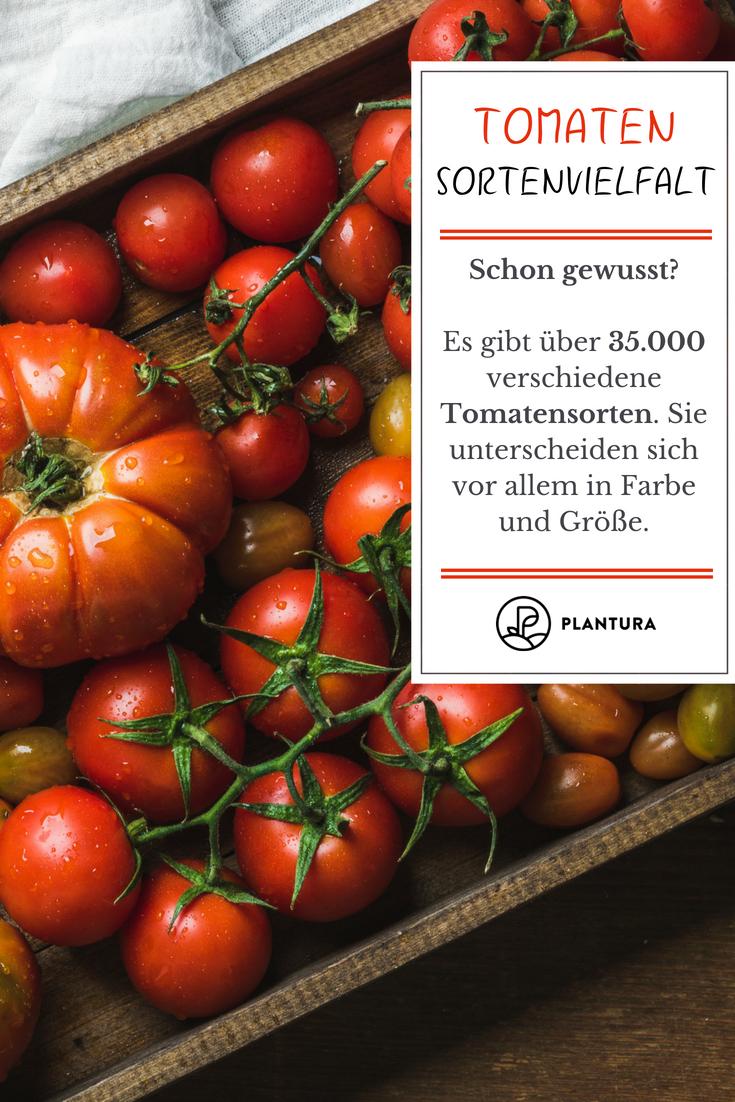 Tomate Paradeiser Pomodoro Im Portrait Herkunft Anbau Und Ernte Tomaten Garten Tomaten Sorten Und Tomaten