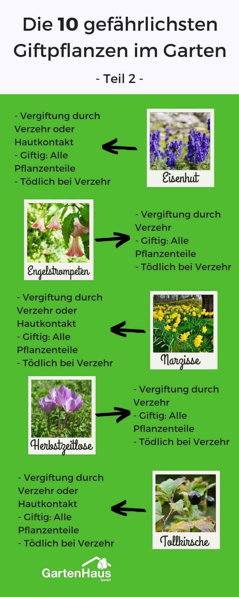 Die 10 Gefahrlichsten Giftpflanzen Im Garten Giftpflanzen Blauregen Pflanzen Pflanzen