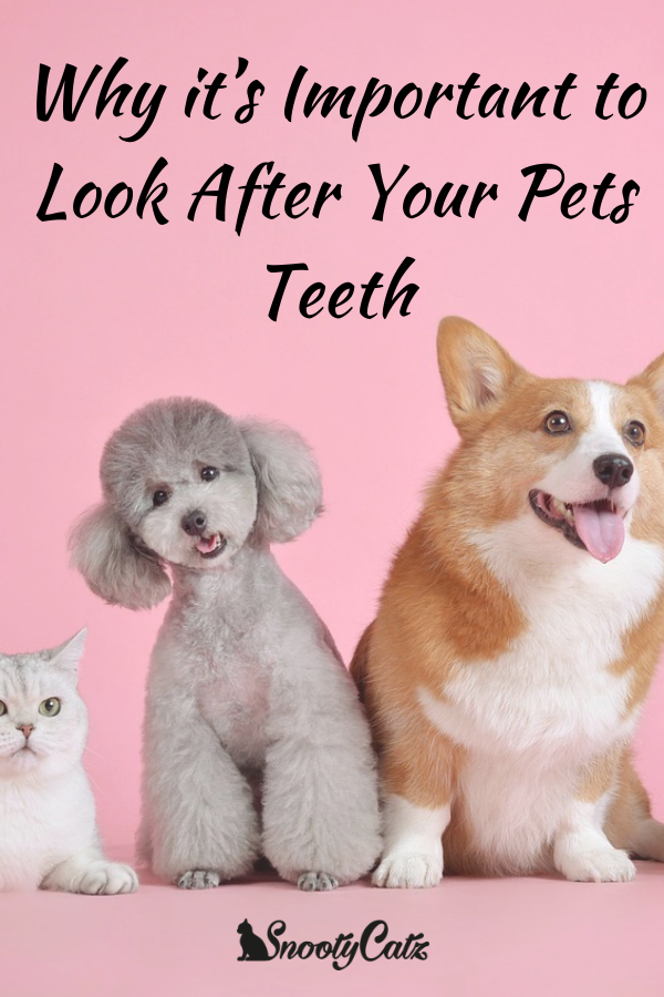 Why It S Important To Look After Your Pets Teeth Pet Dental Care