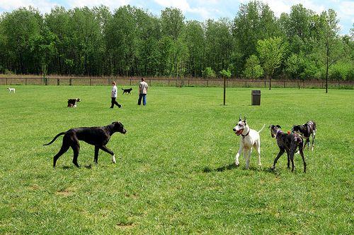 Dog Friendly Vacationing In Cincinnati Ohio Dog Friends Dog