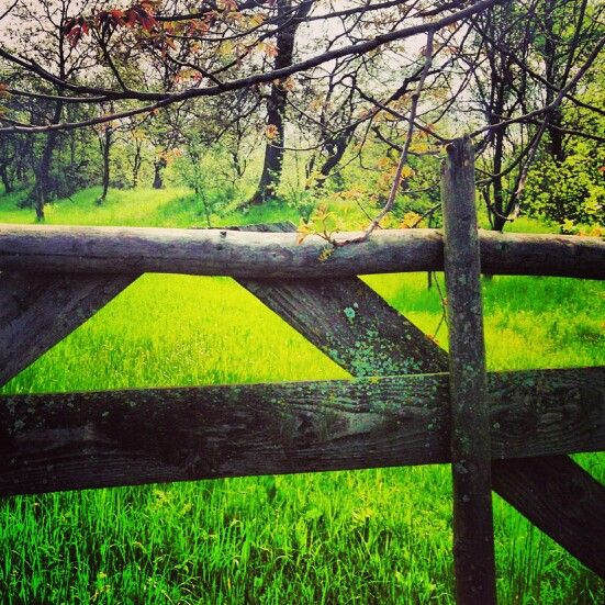 Fairy tales  Grand parents garden, Sarmizegetusa   Www.pure-romania.com   #pureromania #green #pure #travel #inspire #peace #wood #gate #puregreen #freedom #eternity #destination #nature #spring