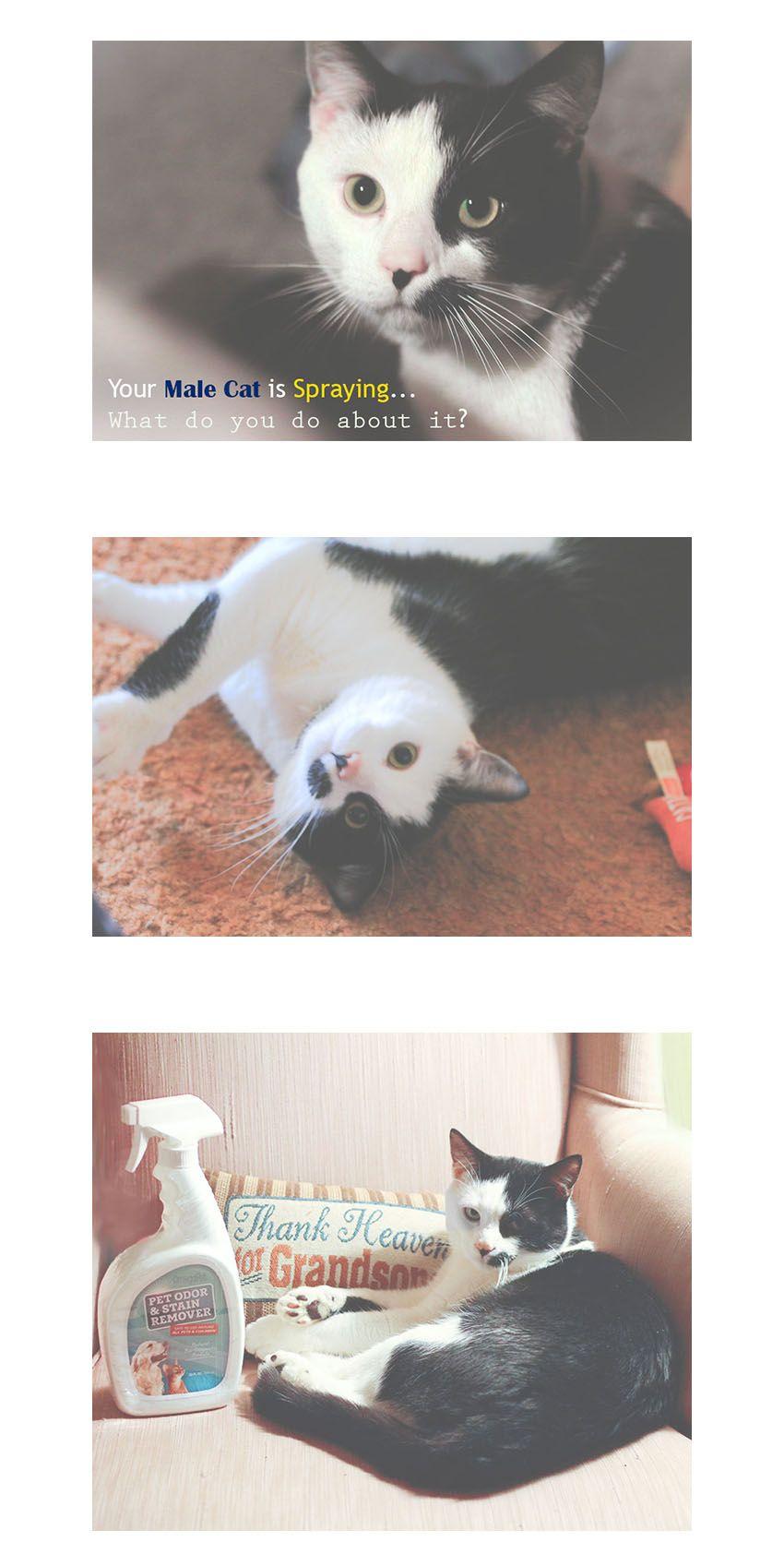 Put a Stop to Cat Spray & Other Pet Odors Pet odors