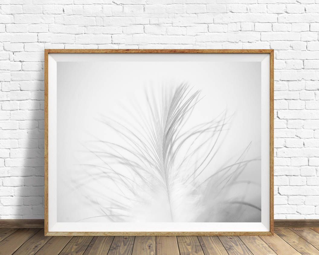 Feather print feather photography feather wall art black and