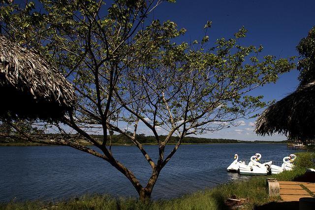 Lagoa Feia - Formosa