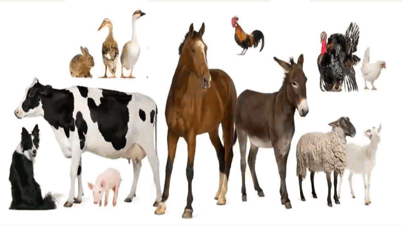 التغذية عند الحيوانات الحيوانات العاشبة الحيوانات اللاحمة الحيوانات الكالشة بحوث مدرسية Learning Arabic Arabic Language Learn Arabic Online