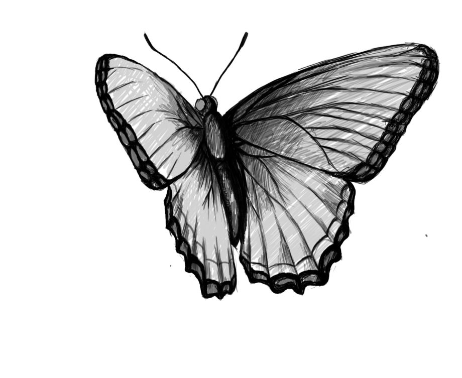 How to Draw a Butterfly | Butterfly drawing, Butterfly ...