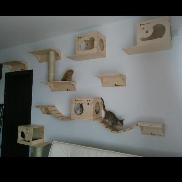 Custom Wall Mount Cat Furniture Systems For Cats Bridge Shelves Customized Condos Tree