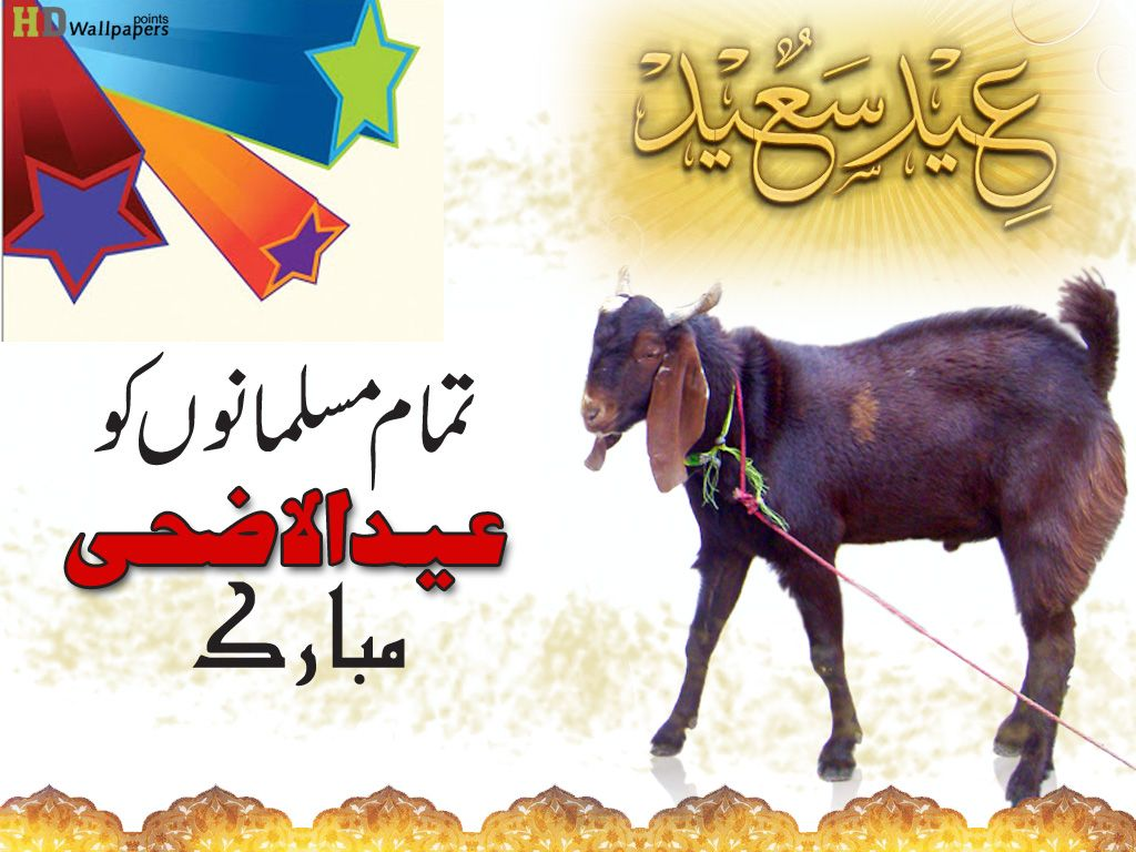 Bakra Eid 2016 Wallpapers Hd Pictures Live Hd Wallpaper Hq
