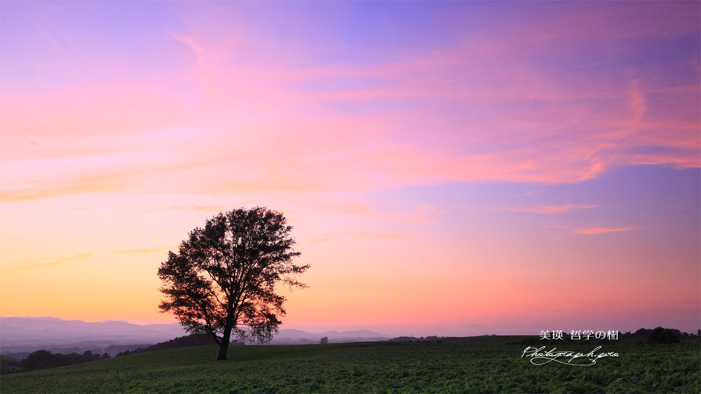 夕焼けの哲学の木 壁紙 風景 木の壁紙