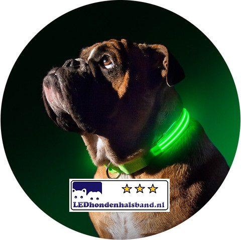 HONDENHALSBAND MET LED-VERLICHTING VOOR UW HOND IN ALLE KLEUREN EN ...