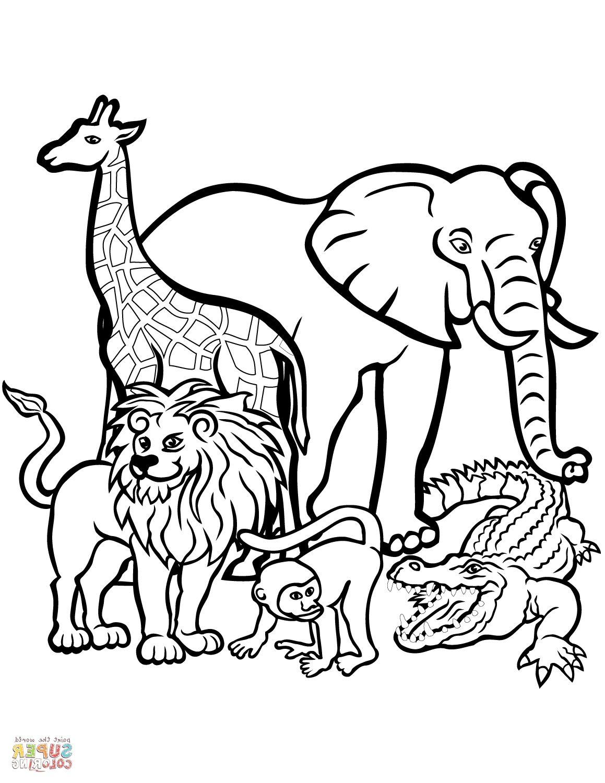Animal Coloring Books
