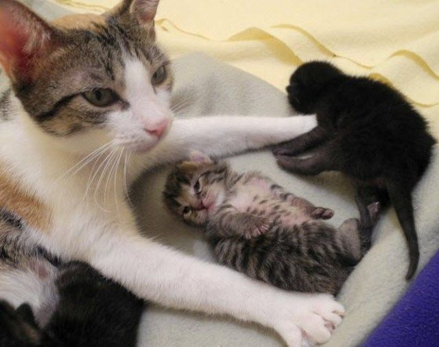 Cheeky Kitten 4th January 2016 We Love Cats And Kittens