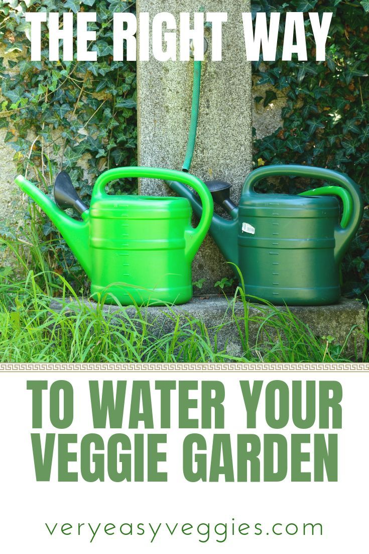 The Right Way To Water Your Garden Gardening For 640 x 480